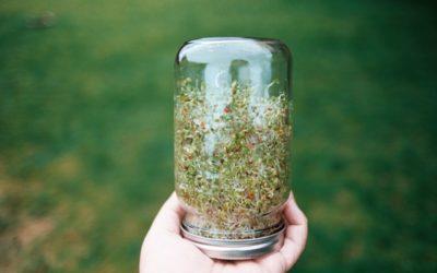 Cultivez vos graines germées et boostez votre santé !